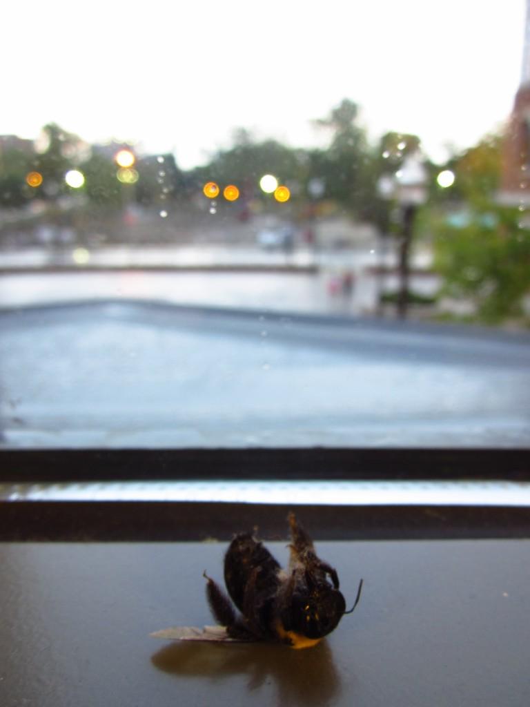 Dead bee on a windowsill.